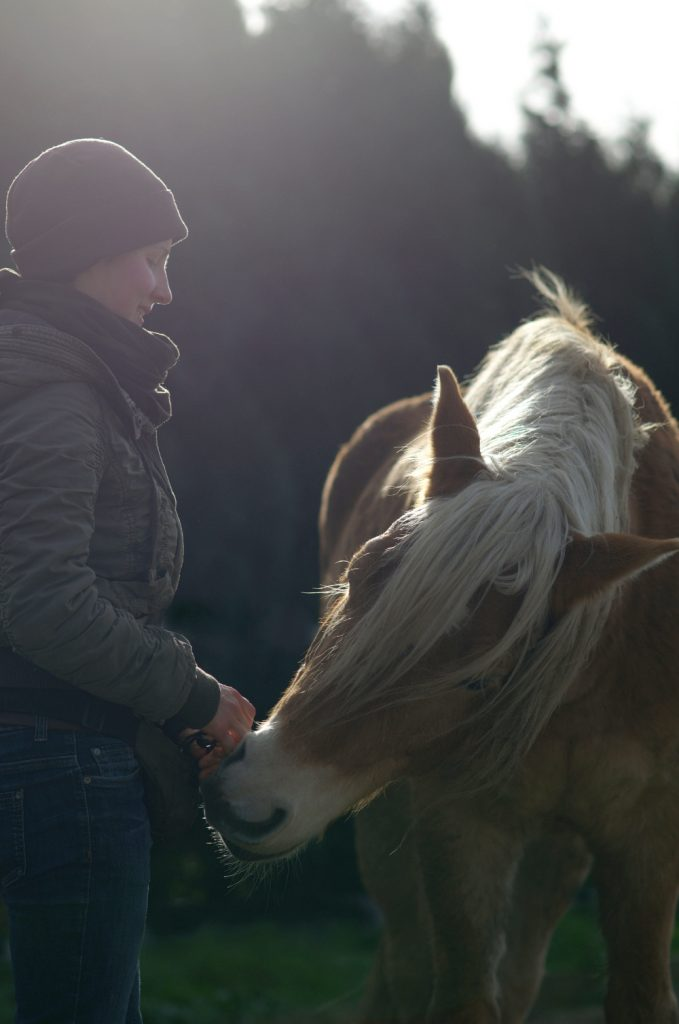 Hilfe, mein Pferd beißt.