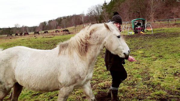 Pferd legt Ohren an