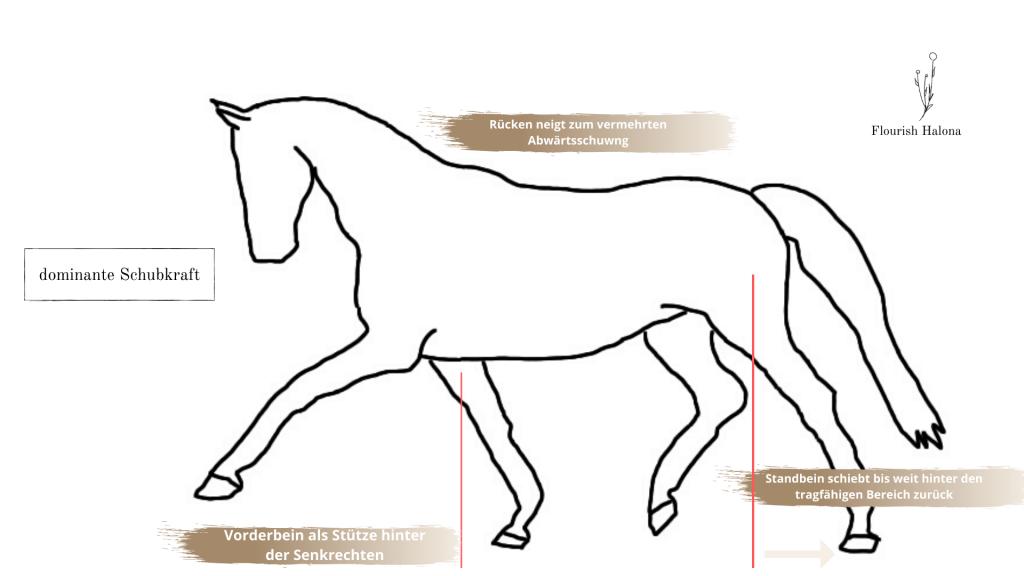 Schubkraft Pferd Gymnastizierung