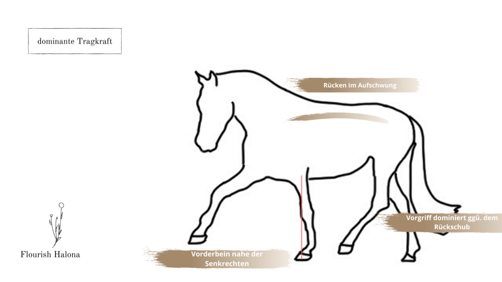 Tragkraft Pferd Gymnastizierung