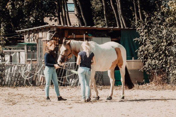 Dissoziation Pferd